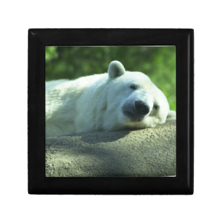 Sleepy Polar Bear Gift Box