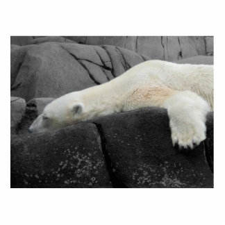Sleepy Polar Bear Statuette
