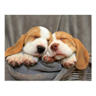 Sleepy Puppies Postcard