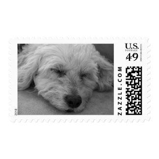 Sleepy Puppy Postage Stamp