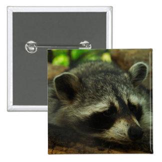 Sleepy Raccoon - Wildlife Photography Animals Buttons
