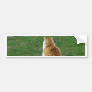 Sleepy Red Cat - Let me GO and SLEEP! Bumper Sticker
