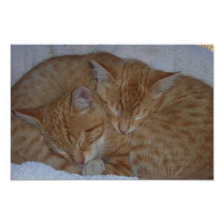 Sleepy relaxed kittens poster