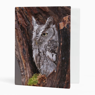 Sleepy Screech Owl Mini Binder