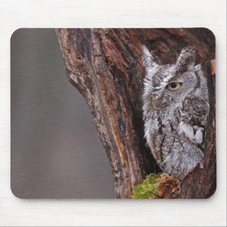 Sleepy Screech Owl Mouse Pad