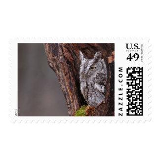 Sleepy Screech Owl Postage