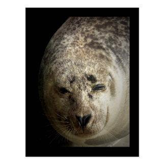 Sleepy Seal Postcard
