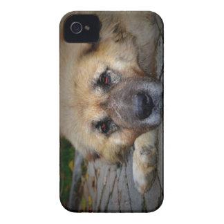 Sleepy Shepherd Case-Mate iPhone 4 Case