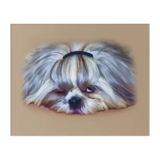 Sleepy Shih Tzu Dog Acrylic Print
