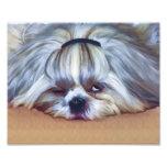 Sleepy Shih Tzu Dog Photo Print