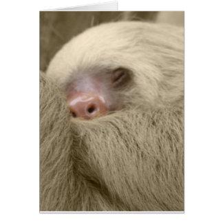 sleepy sloth card