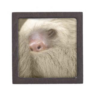sleepy sloth gift box