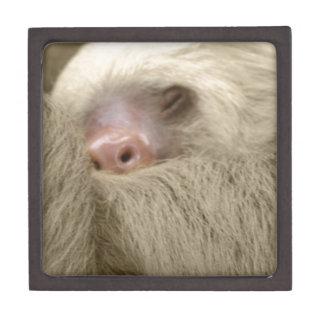 sleepy sloth keepsake box