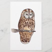 Sleepy Tawny owl