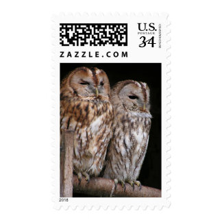 Sleepy Tawny Owls in a Barn Nature Bird Stamp