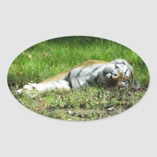 Sleepy Tiger Oval Sticker