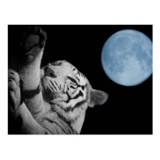 Sleepy Tiger Postcard