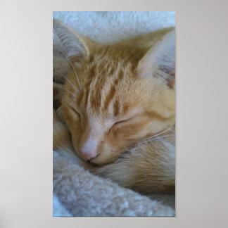 Sleepy Time Cat Poster