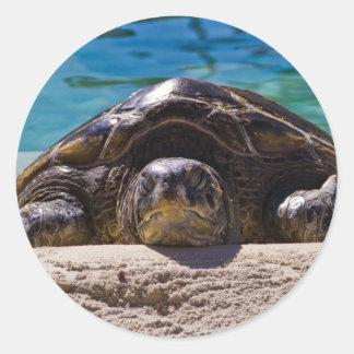 Sleepy Turtle Classic Round Sticker