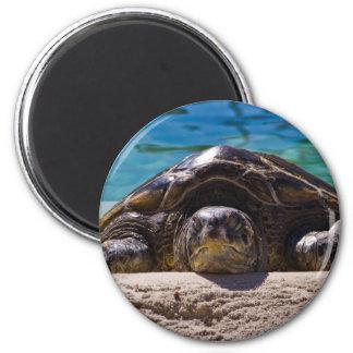 Sleepy Turtle Magnet