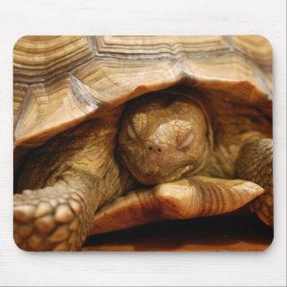 Sleepy Turtle Mouse Pad