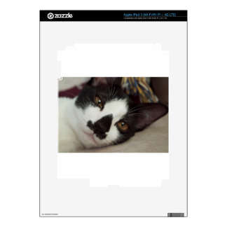 Sleepy Tuxedo Cat Decals For iPad 3