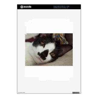 Sleepy Tuxedo Cat Decals For The iPad 2