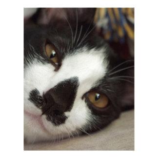 Sleepy Tuxedo Cat Custom Letterhead