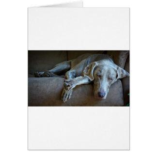 Sleepy Weimaraner Card