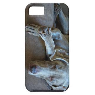 Sleepy Weimaraner iPhone SE/5/5s Case