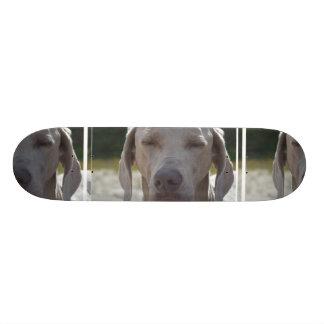 Sleepy Weimaraner Skateboard Deck