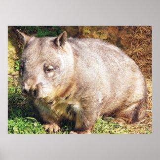 Sleepy Wombat Poster