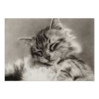 Sleepyhead Main Coon Cat Poster