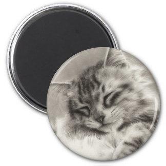 Sleepyhead Maine Coon Magnet