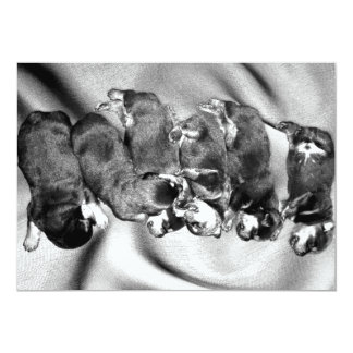 sleepyhead rottweiler puppies card