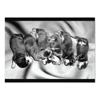 "sleepyhead rottweiler puppies 4.5"" x 6.25"" invitation card"