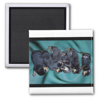 sleepyhead rottweiler puppies magnet