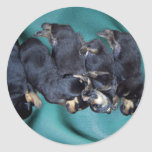 sleepyhead rottweiler puppies round sticker