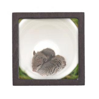 Sleepytime Baby Mice in Teacup Keepsake Box