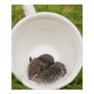 Sleepytime Baby Mice in Teacup Poster