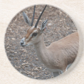 Slender Horned Gazelle  Coaster