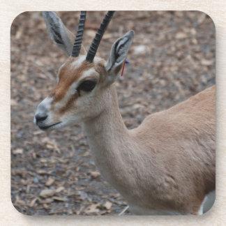 Slender Horned Gazelle Set of Six Coasters