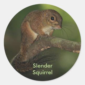 Slender Squirrel Round Sticker