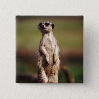 slender-tailed meerkat button