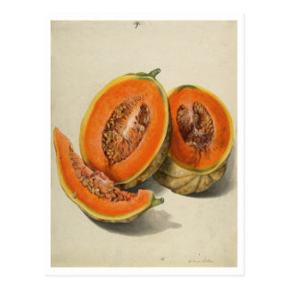 Sliced cantaloupe melon illustration postcard