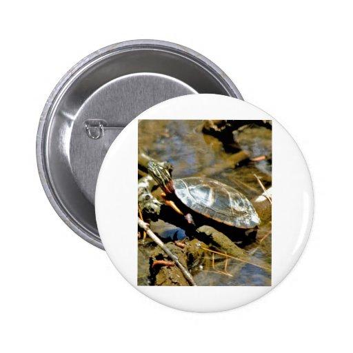 Slider Turtle Pinback Buttons