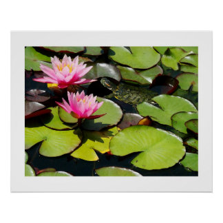 Slider Turtle, Waterlilies and Lilypads Print