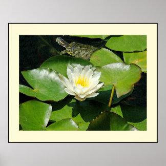Slider Turtle Waterlily Flowers Pond Wildlife Poster