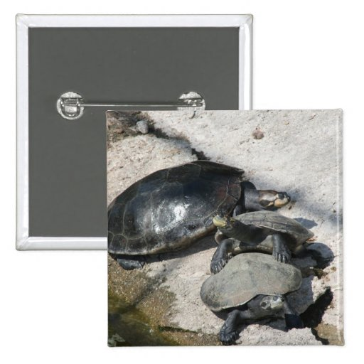 Slider turtles in a row photo pinback buttons