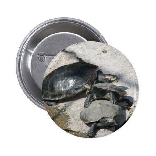 Slider turtles in a row photo pinback button